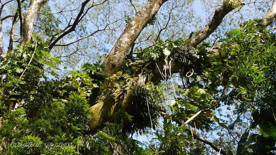 植物に覆われた木