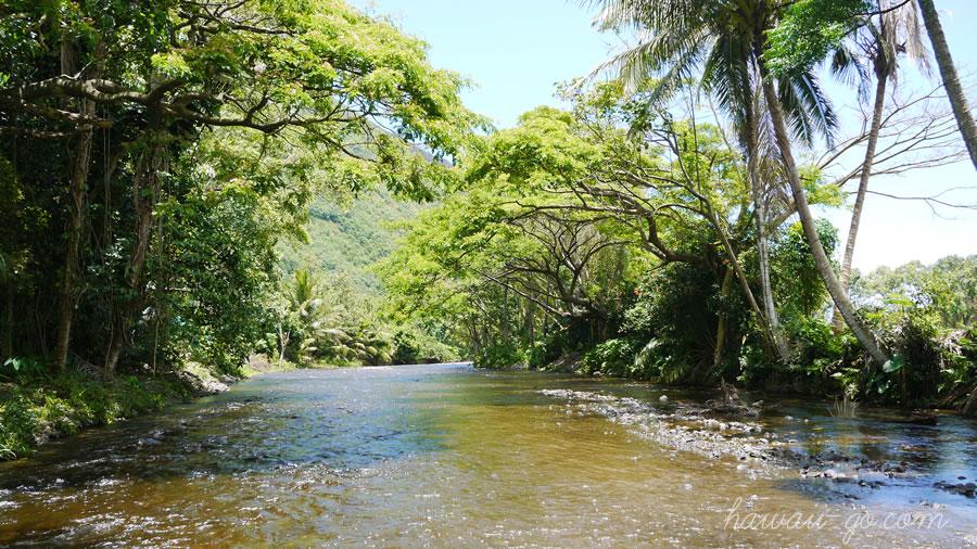 ワイピオの川
