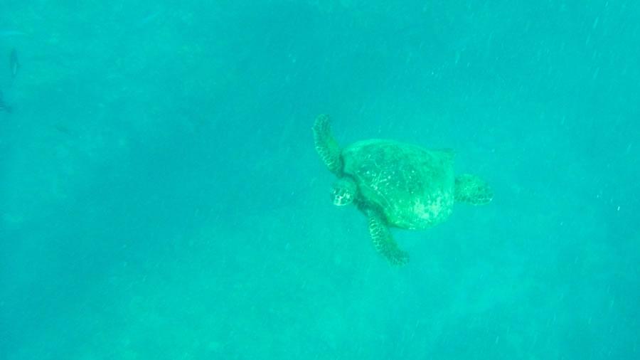 海の中のウミガメ