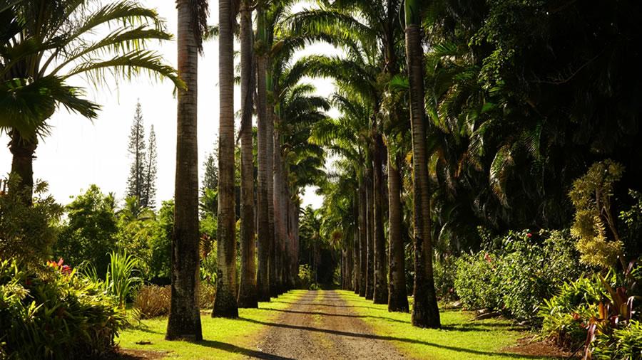 カウアイ島の植物園
