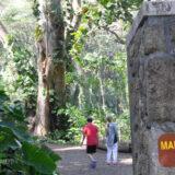 Manoa [Mānoa](マノア)